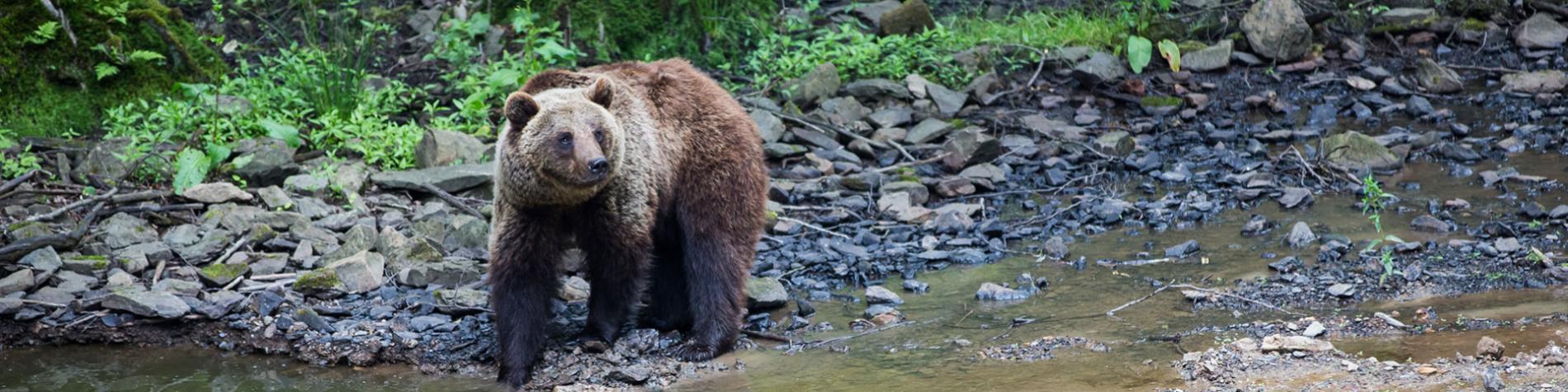 Forestia - parc animalier - parcours aventure - La Reid - animaux - famille - tyroliennes