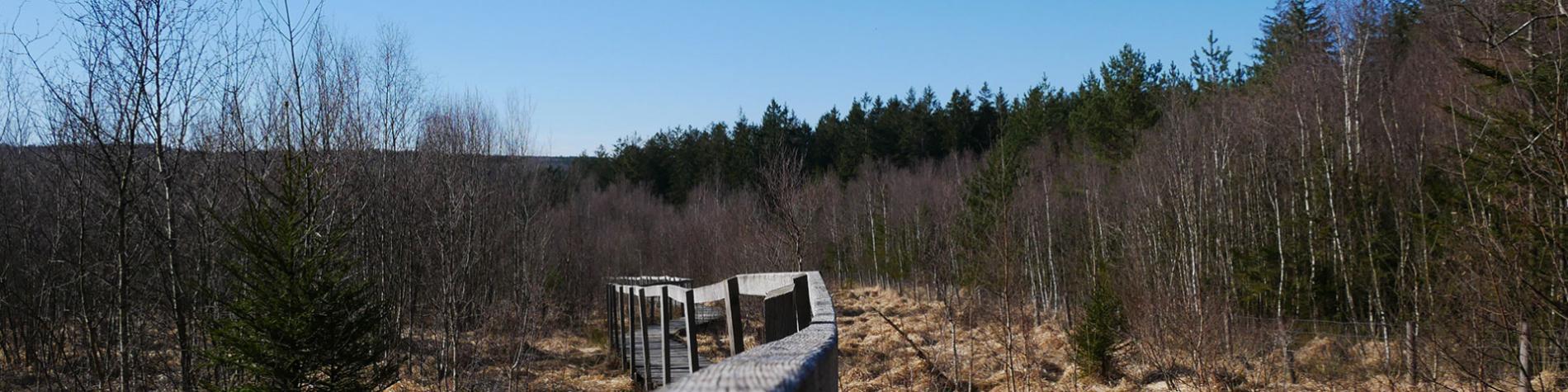 Forêt de la Semois -la Houille - terre sauvage - massif naturel - Printemps - Gedinne - Croix Scaille - Fange de l'Abime