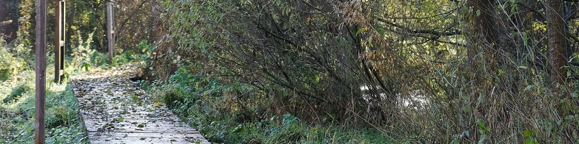 Zone humide de Lomprez - Balade didactique - Vue du caillebotis - Wellin