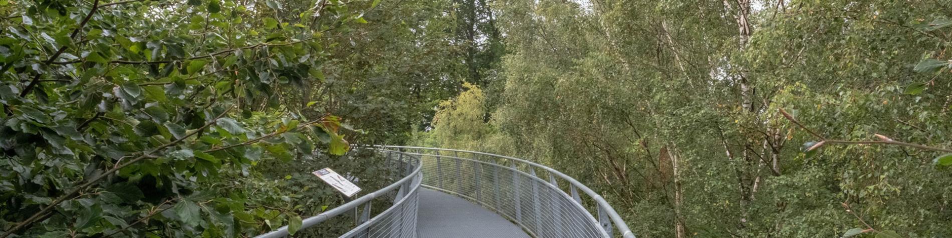 L'Escale forestière - forêt - Bon-Secours
