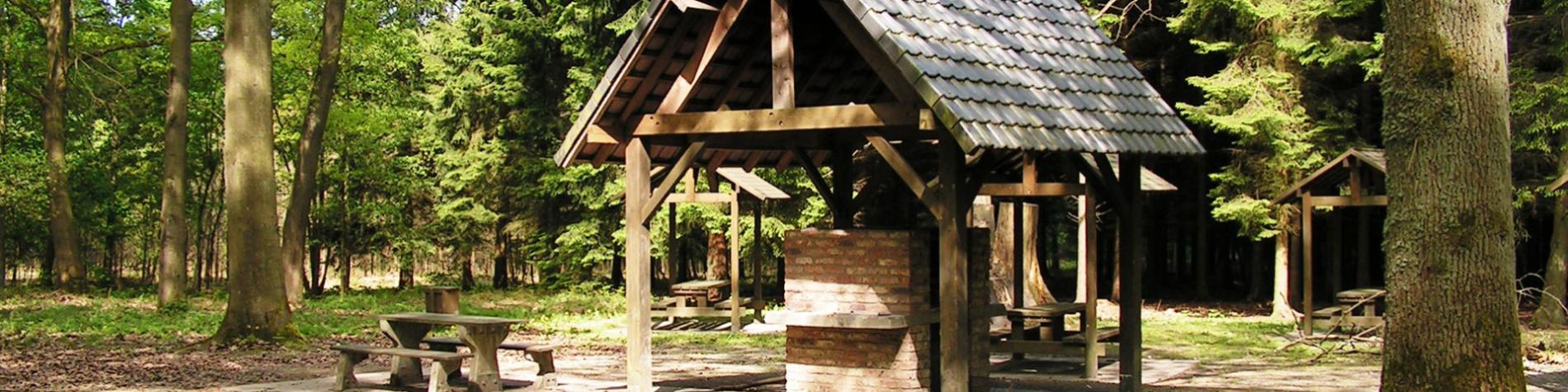Bois didactique de Courrière - Namur - aire - BBQ - arboretum - flore - faune