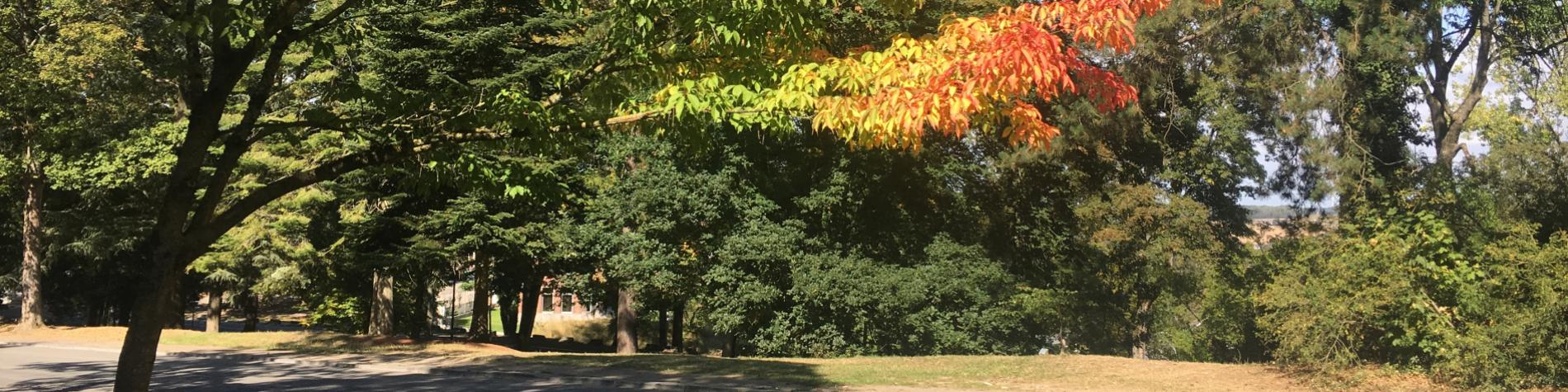 Arboretum - Citadelle- de -Namur