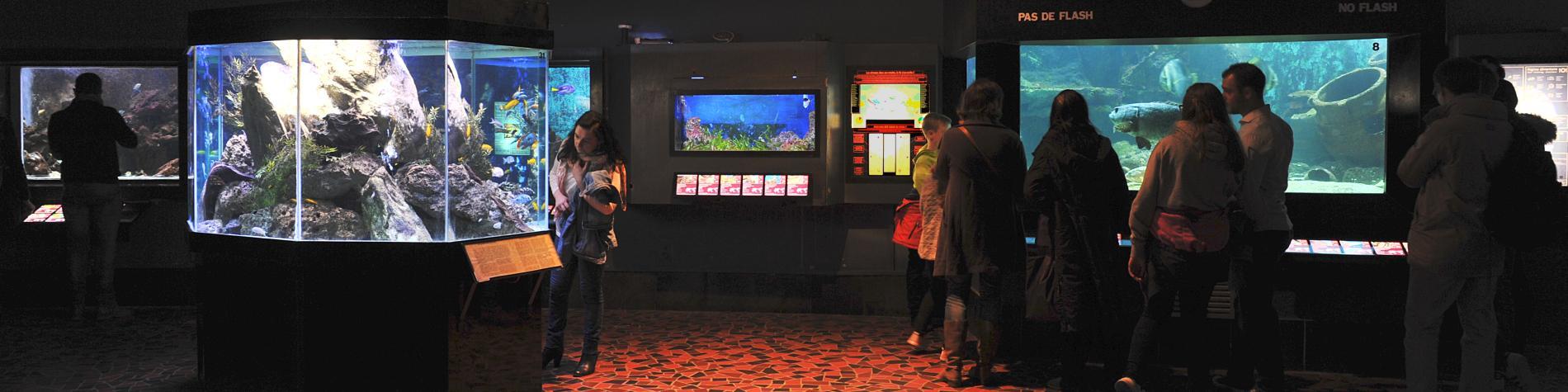 Les aquariums de l'Aquarium-Muséum de Liège