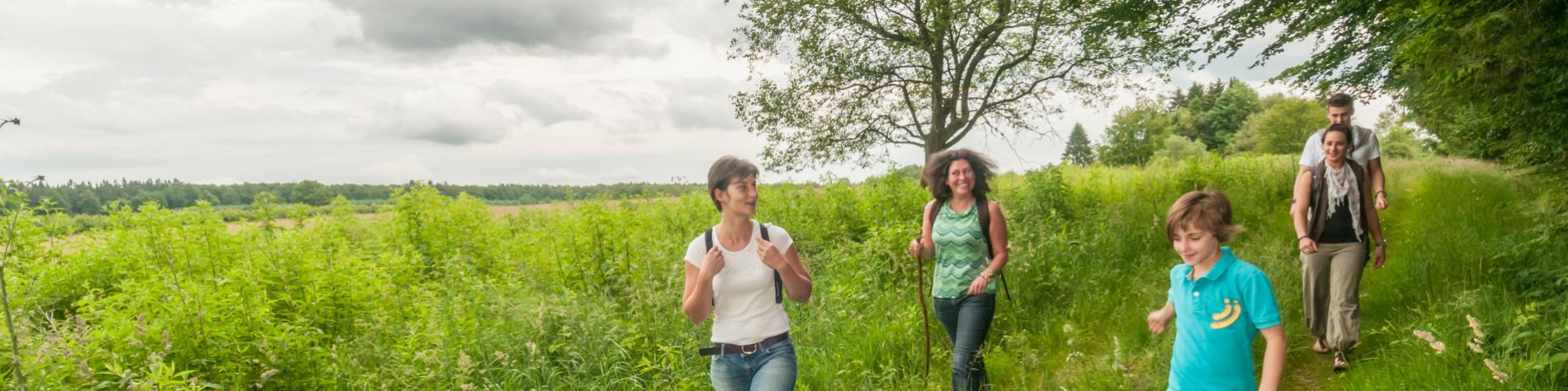 Promenez-vous dans les Ardennes à Samrée (La-Roche-en-Ardenne)