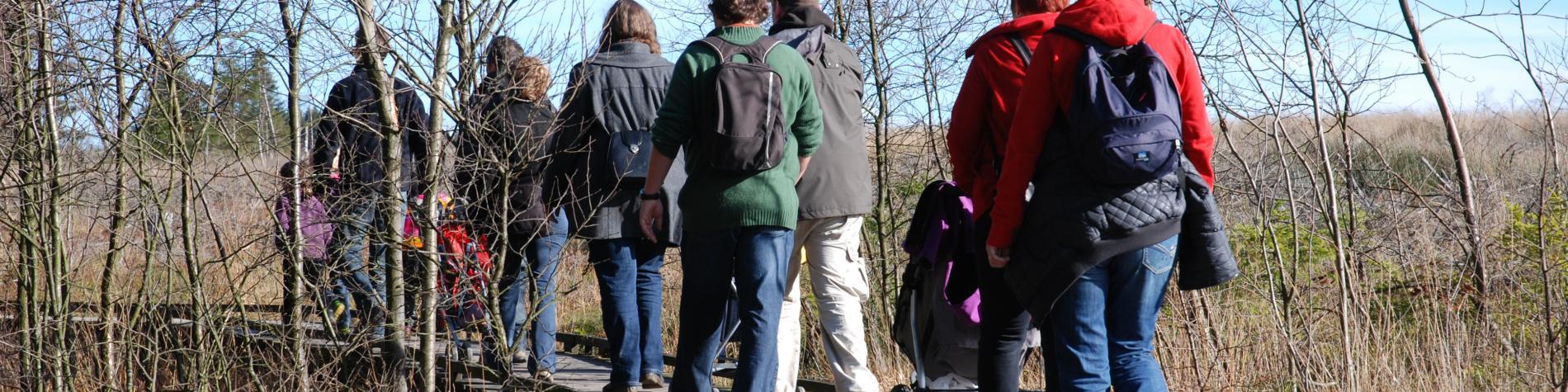 Spazieren Sie durch den Naturpark Hohes Venn - Eifel