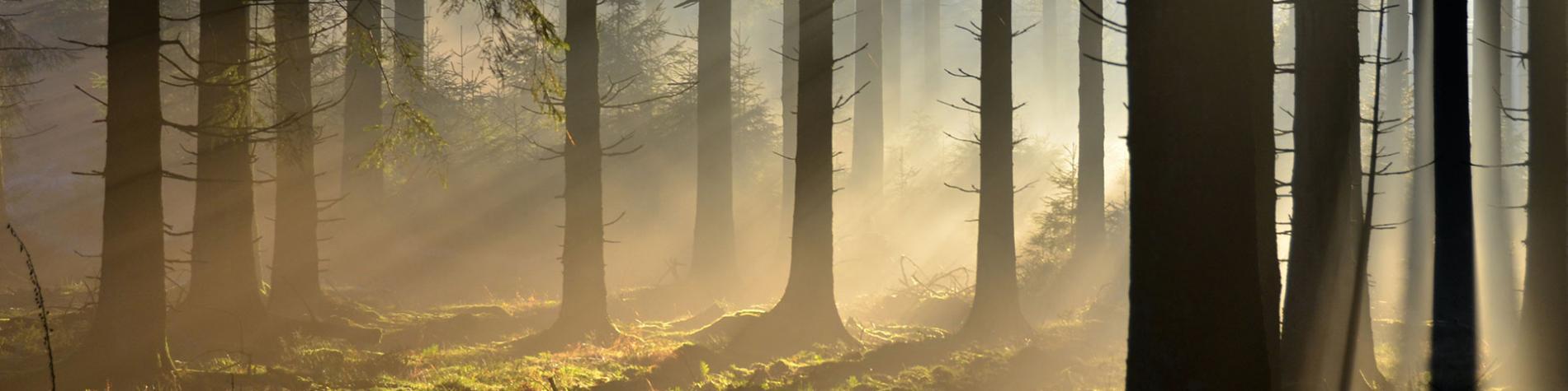 Forêt - Anlier - Wallonie - Nature - Belgique