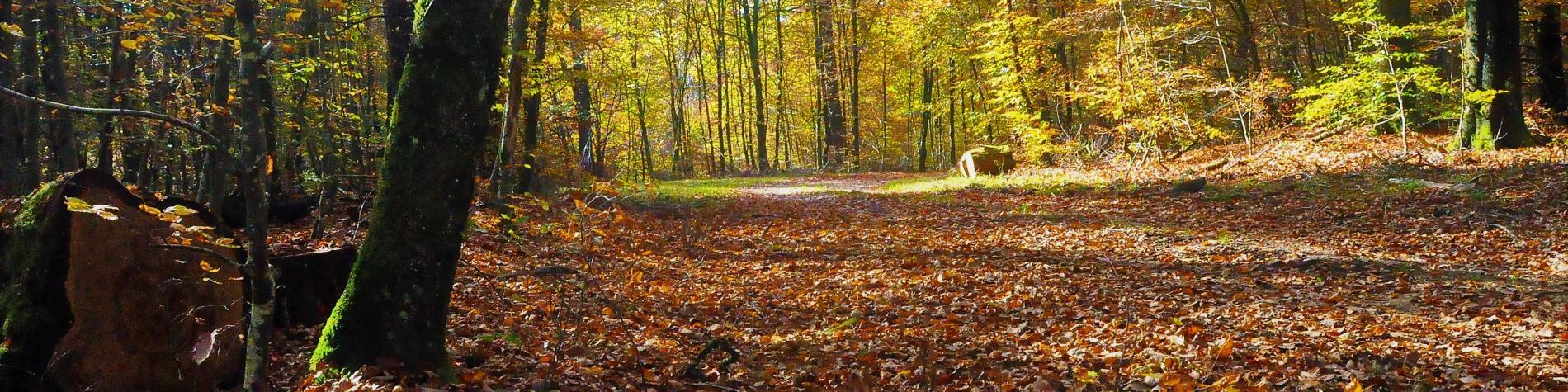 Vue de la Forêt d'Anlier en Ardenne