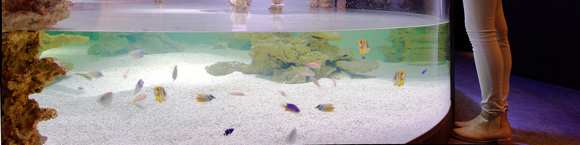 L'Aquarium-Muséum Universitaire - Liège - Plongée magique - monde aquatique - 20 000 spécimens - lagon