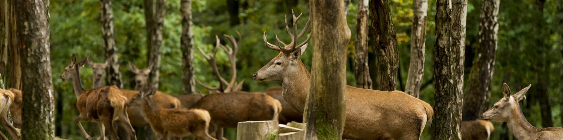 Wild Park Coo - parc animalier - Ardenne - Cascades - train touristique