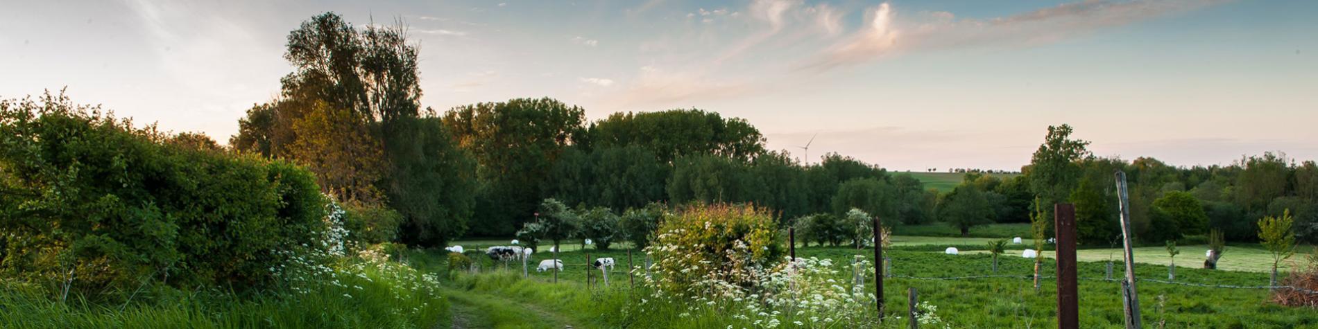 Parc Naturel - Vallées de la Burdinale - Mehaigne