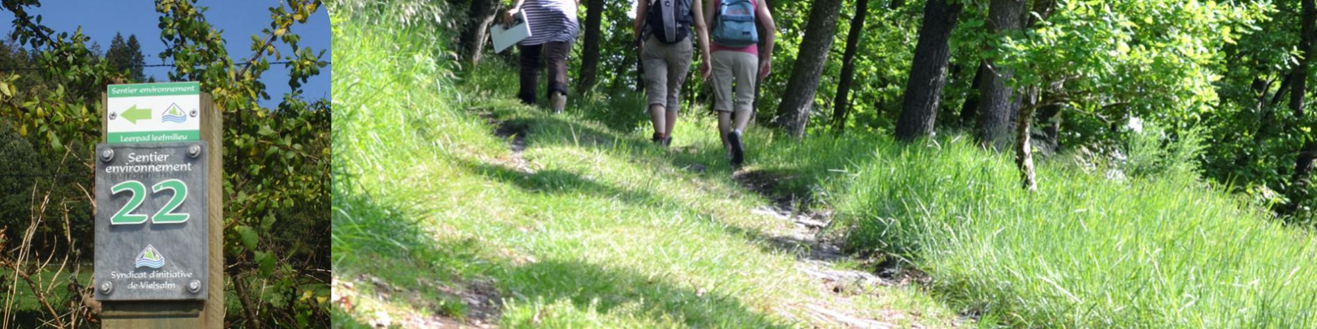 Sentier didactique - Offergeld - Près de Vielsalm