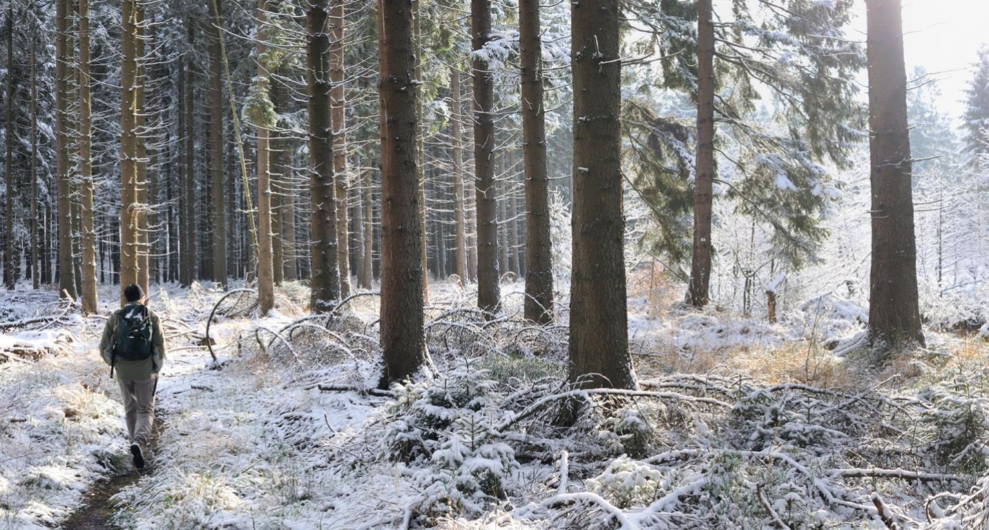 Petergensfeld - Forêt - Hiver