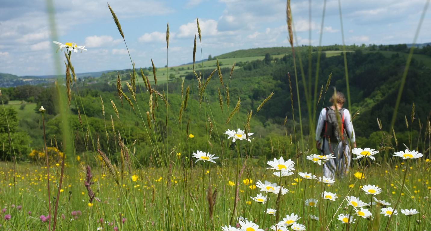 Champs - paysage - printemps - fleurs - paquerettes