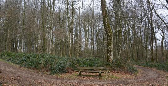 Arboretum - Bellefontaine - parcours didactique